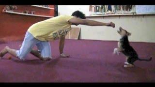 Abdullah Minor كيف تشجع الكلب و تعليمه بدايات الهجوم و العض