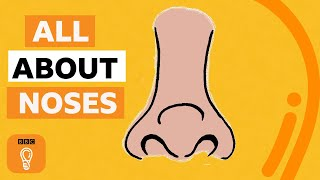 What's the point of noses? | BBC Ideas