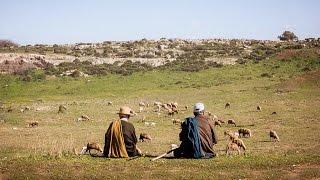 Visa pour le Maroc : comment améliorer l'élevage du mouton
