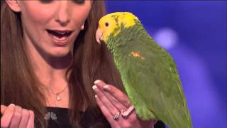 Śpiewająca papuga w Mam Talent [NAPISY PL]