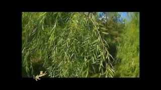 Природный феномен Казахстана - Боровое