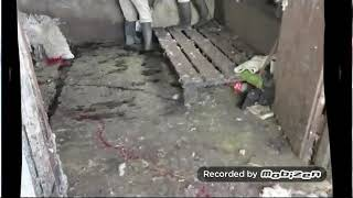 Maltraitence d'animaux dans les abattoirs