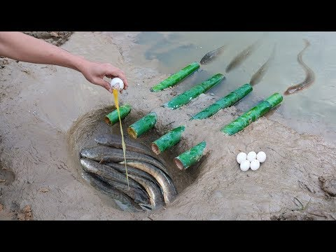 Unique Fish Trapping System Using Bamboo - Catch Fishing Using Duck Eggs