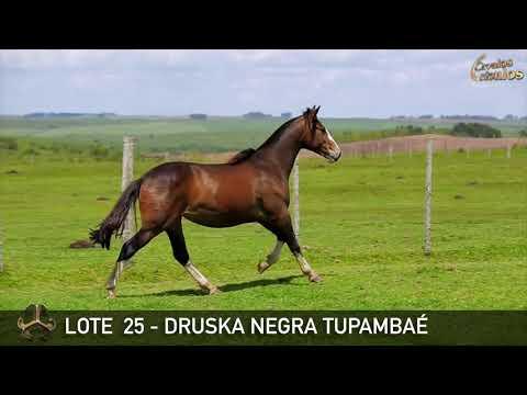 LOTE 25   DRUSKA NEGRA TUPAMBAÉ