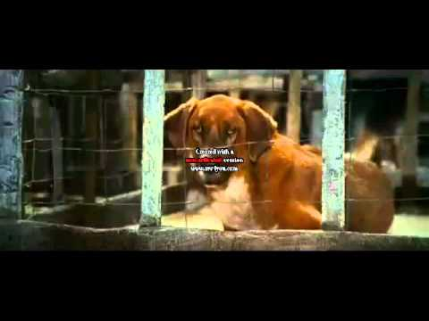 Beverly Hills Chihuahua - I love You {Short}