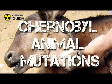 Chernobyl Animal Mutations - pictures of Mutated Animals in the Chernobyl Zone