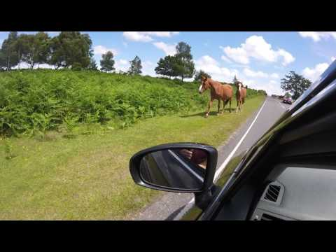 New Forest National Park Hampshire England Wild ponies