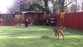 Royvon Dog Hotels And Boarding And Training