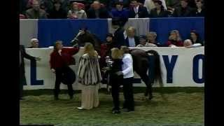 1996 US Ntnl Park Horse Final MHR Nobility