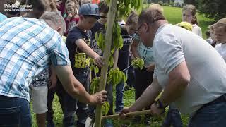 Sajenje dreves pri Sv. Juriju ob Ščavnici