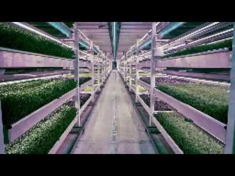 The World's First Subterranean Farm # Growing Underground # London