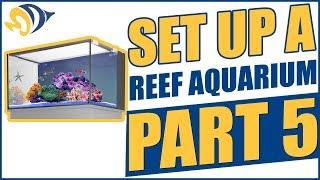 How to Set Up a Reef Aquarium, Part 5: Livestock Acclimation