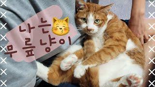 모망라토TV_라떼는 마뤼야~ ㅣ 푸들 고양이가족 ㅣ 3…