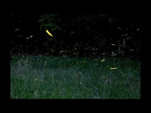How to photograph fireflies