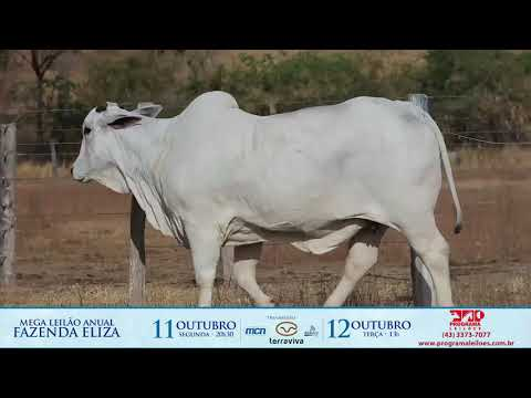 LOTE 228 1
