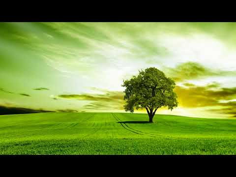 Relaxing Contemporary Instrumental Music 10 Hours