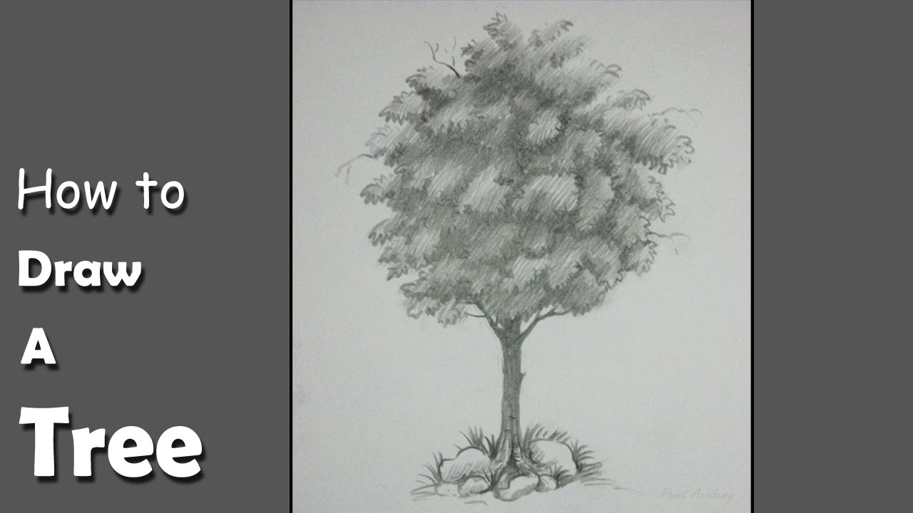How To Draw A Tree With Pencil Step By Step