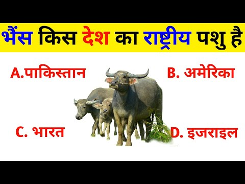 General Knowledge Question (Part 11) | Gk 25 Questions | Interesting Gk | Gk | Ashu Study