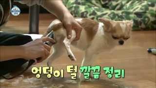 [Living Alone] Amber,self-styling for pets! 엠버, 반려견 미용 직접해! [나 혼자 산다] 20150306
