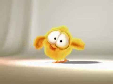 Video le piouzelzok ce petit oiseaux si mignon lorsqu 39 il for Les petits oiseaux