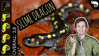 Spotted Salamander, The Best Pet Amphibian?