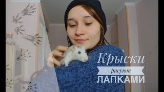 Как крысы рисовали ► Крысики учатся рисовать лапками