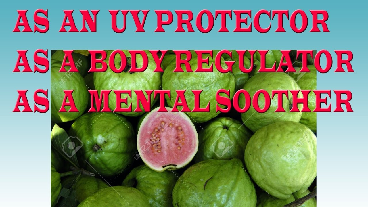 How To Eat Mini Guava Guava As An Uv Protector,body Regulator,diabetes  Controller,facial Mouth,skin