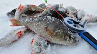 ГЛУХОЗИМЬЕ УХОДИ Зимняя рыбалка 2020 на окуня ловля на безмотылку и жерлицы на щуку