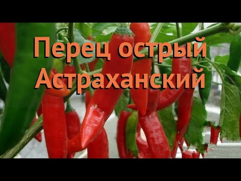Перец острый Астраханский (astrakhanskiy) 🌿 обзор: как сажать, семена перца Астраханский
