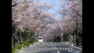 ★逗子ハイランド(西友・ATM・郵便局・桜・緑)