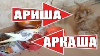 Попугай хулиган Аркаша и кошка Ариша The bully parrot Arkasha and the cat Arisha
