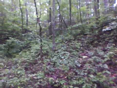 Ginseng In Illinois Map.Ginseng Hunting Tips By Yttnhunter 071810 Youtube