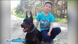 В Уфе появились волонтеры по поиску пропавших животных