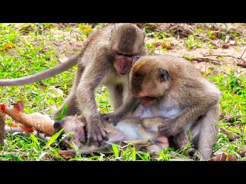 Mother Monkey Cry, Finally She Found Her Baby Monkey