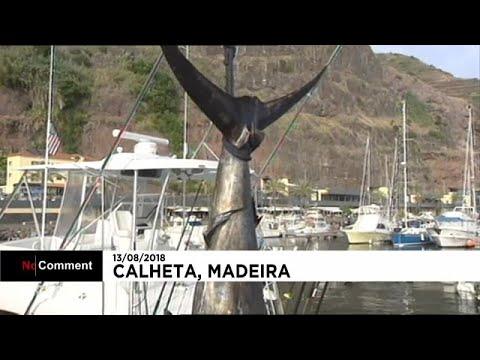 صياد أمريكي يصطاد سمكة مارلن وزنها 366 كلغ  - نشر قبل 4 ساعة