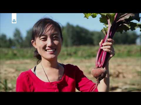 Biofarm vor Peking | China Tea-Time