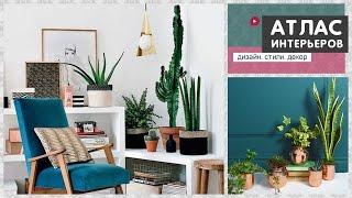 видео Модные комнатные растения в интерьере