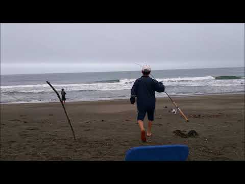 Surfperch Fishing Low Tide....