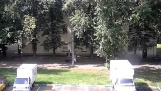 видео Яблоня Московское позднее