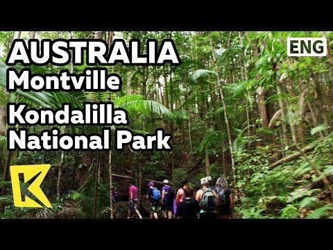 【K】Australia Travel-Montville[호주 여행-몬트빌]콘달릴라 국립공원/Kondalilla National Park/Strangler fig