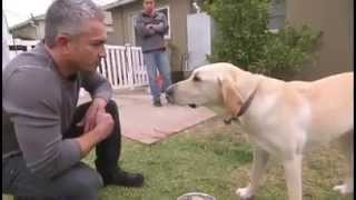 Download Video soumission chien morsure MP3 3GP MP4