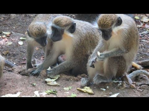 Barbados - 8 of 12 - Wildlife Reserve / Fairley Hill Park