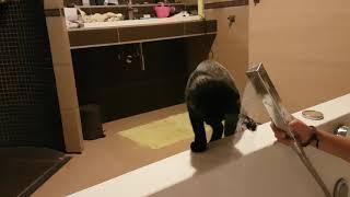 Curi,the cute cat.