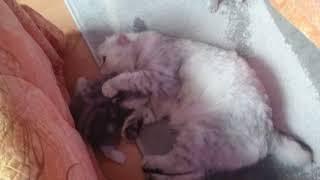 Кошка есть котят)
