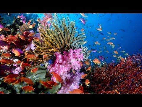 Ocean life -   Full of beautiful creatures.