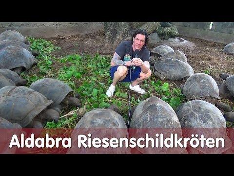 Reptil TV - Folge 113 – Aldabra Riesenschildkröten – Seychellen 2018