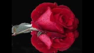 موسيقي... طير بينا يا قلبي. ♫ محمد فوزي ♫