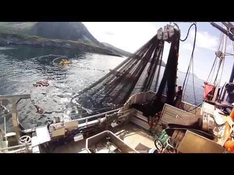 50 tonn med makrell p ms elias 50 tonns of mackerel with for Elias v fishing