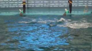 Pole Aquarium @ Dalian, China