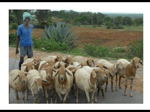 how to start sheep farming in karnataka